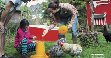 Der Traum vom eigenen Huhn